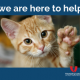 COVID-19: Volunteering in Alert Level 4